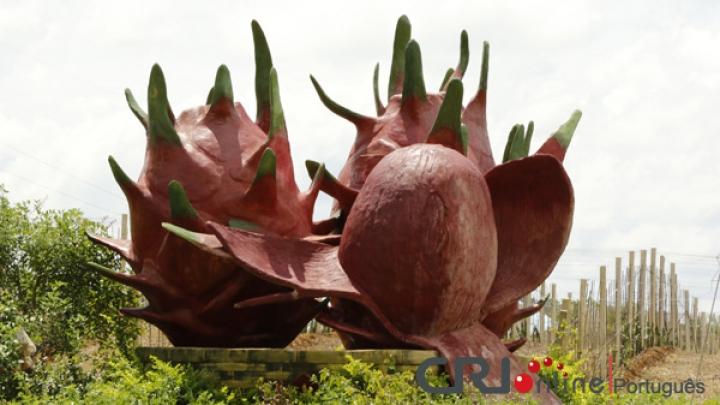 Pitayas num pomar-exemplar de agricultura moderna em Guangxi